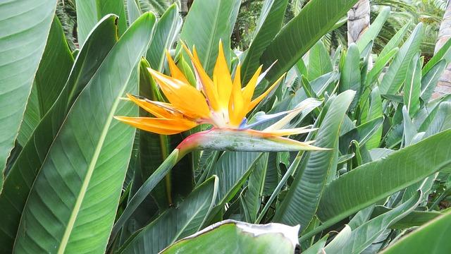 Free tenerife nature flower