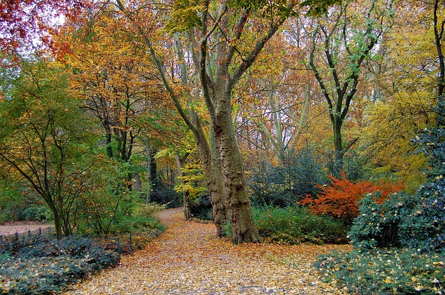 Free autumn forest park trees shrubs colorful blatter