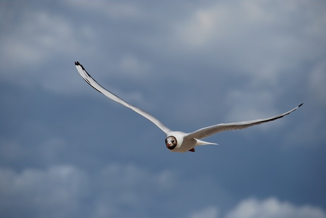 Free jonathan livingston seagull the nature of the summer