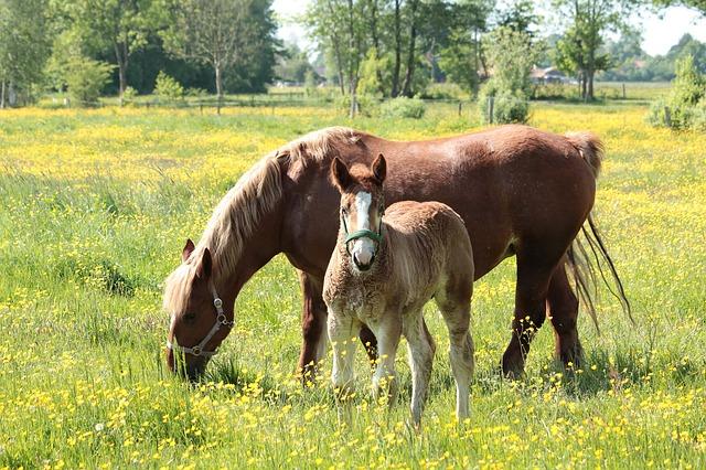 Free kaltblut horse animal halter horses mare foal