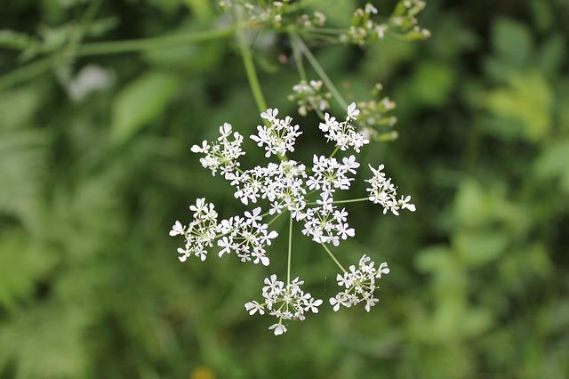 Free vegetation plant blossom flower white nature