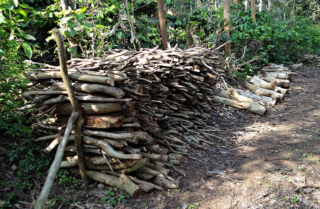 Free firewood fuel stack forest kodagu india