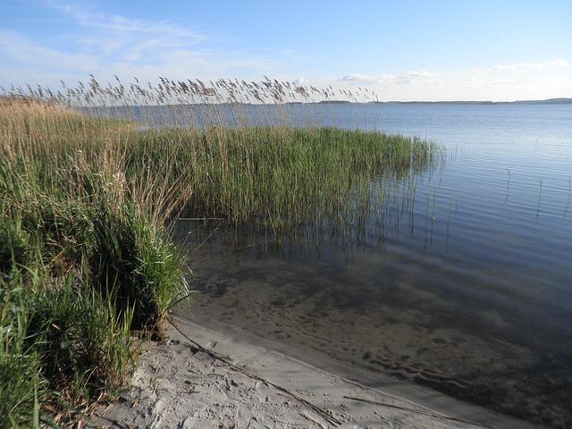 Free reed landscape lake sandy shore island of usedom