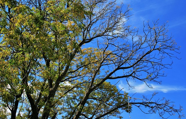 Free tree leaves branches green foliage sky blue