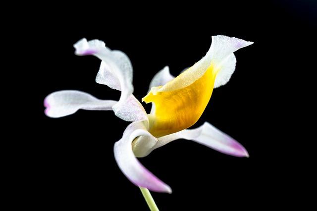 Free wild orchid orchid flower white gellb purple