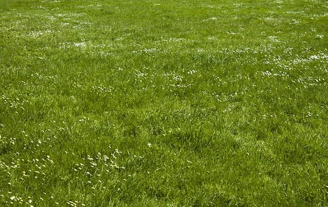 Free meadow rush space plant grass texture environment