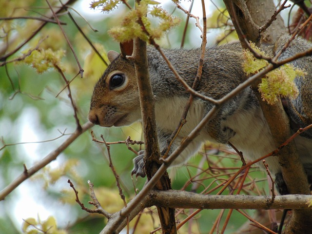 Free squirrel animal forest branch tree nature mammal