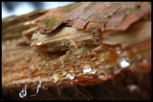 Free the bark tree rosa resin wood
