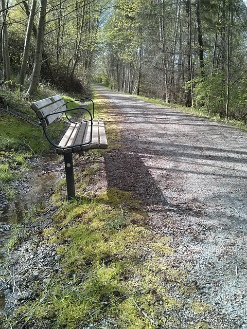Free park bench trail spring nature perspective