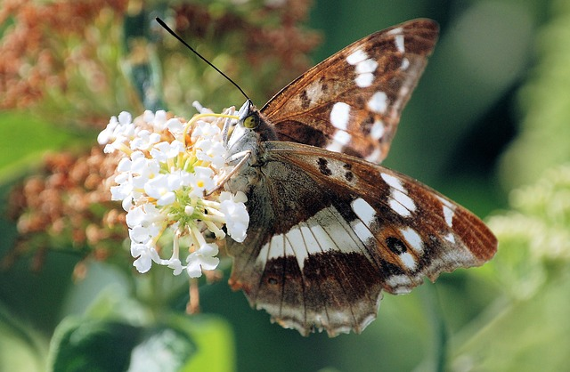 Free butterfly insect nature fauna