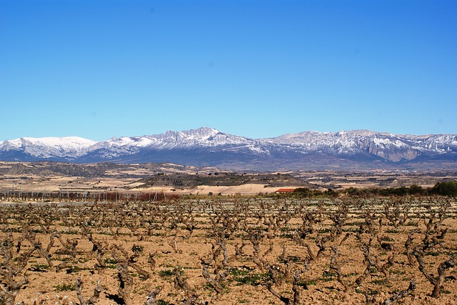 Free la rioja logroño vineyards winter