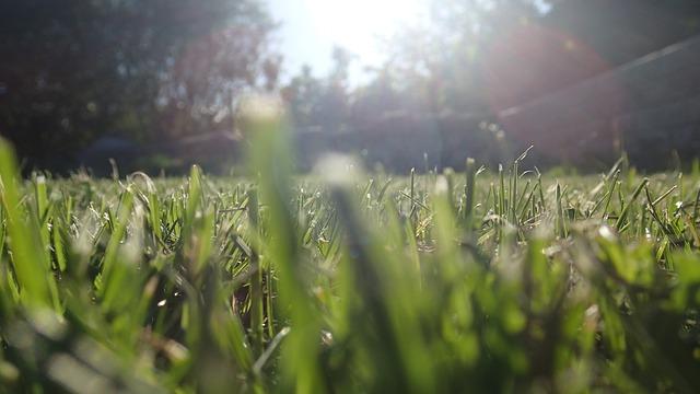 Free grass straws sun spring summer green lawn