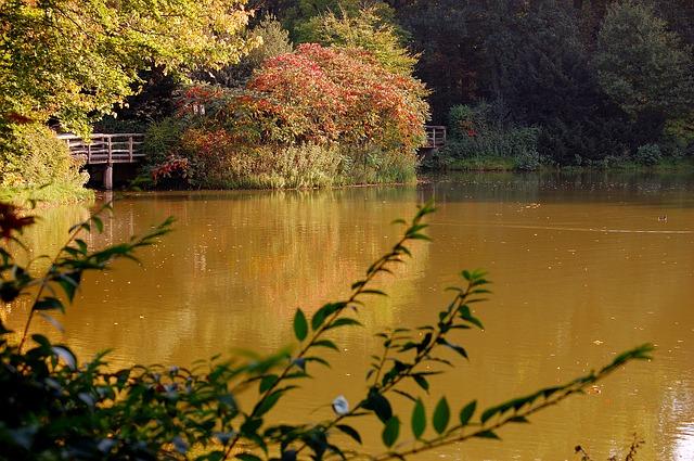 Free see forest autumn bridge water trueb boardwalk