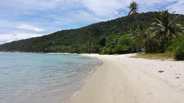 Free hawaii beach ocean sea palm trees