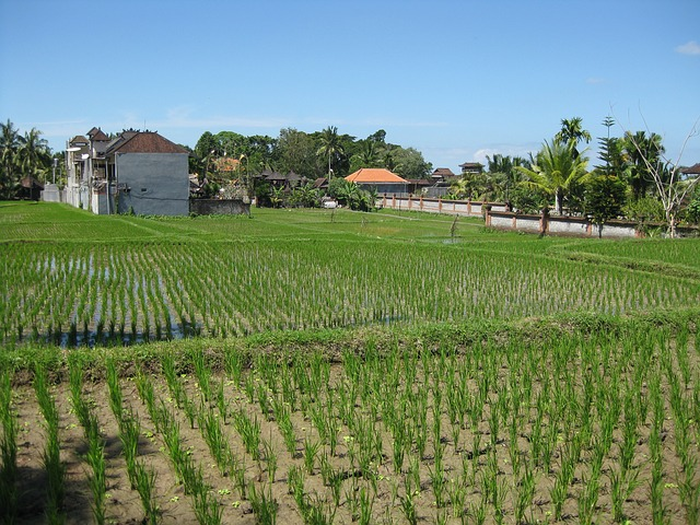 Free agriculture farm fields seedlings saplings growth