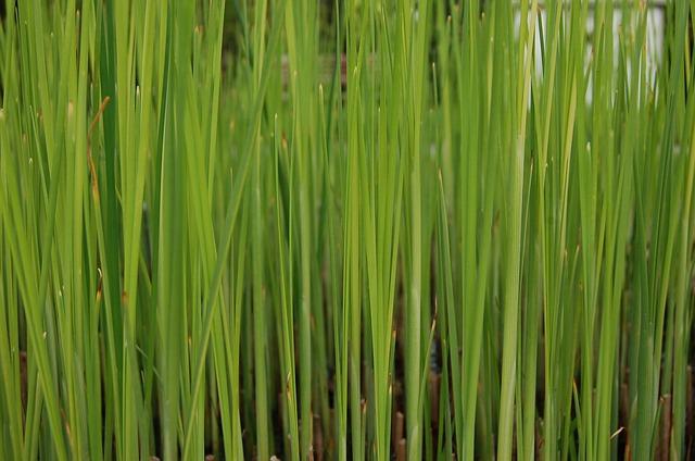 Free grass green background grassy stalks lawn texture
