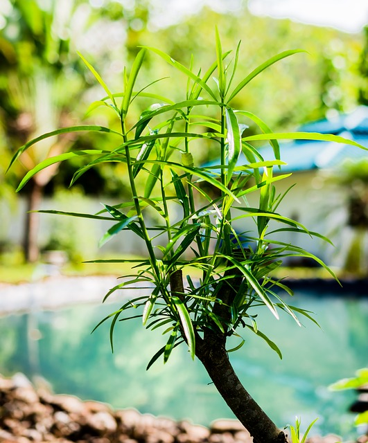 Free boy shoots young leaves green garden pond