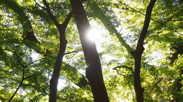 Free woods sun arboretum japan autumn