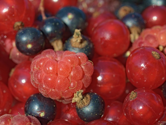 Free malina currant fruit garden the fruit of the
