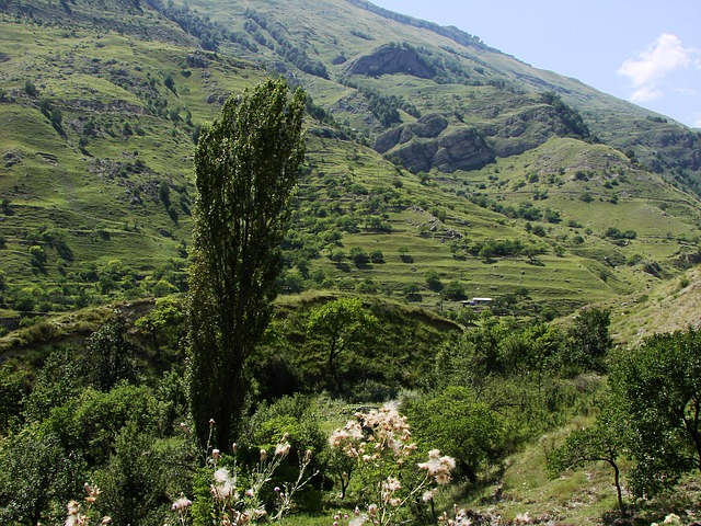 Free tree green landscape