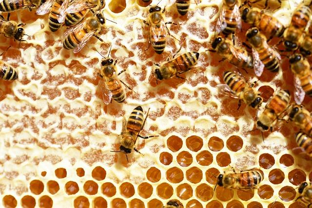 Free bees honey honey bees honeycomb combs beehive
