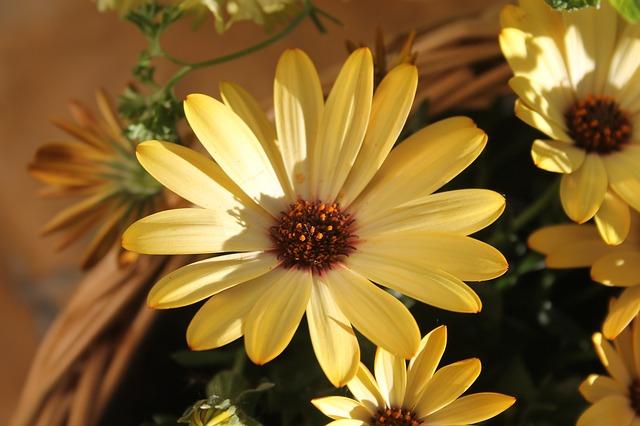 Free yellow flower flower close macro nature