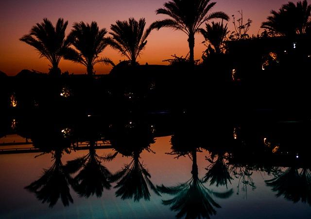 Free palm trees mirroring pool idyll holiday