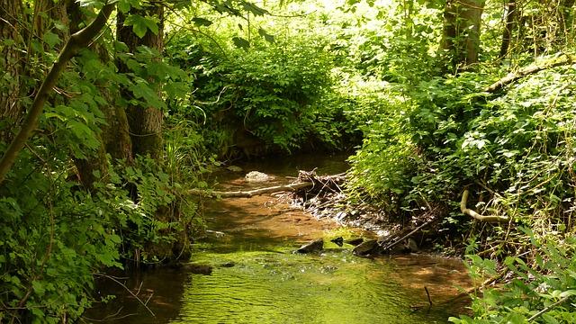 Free nature water bach creek idyll splash landscape