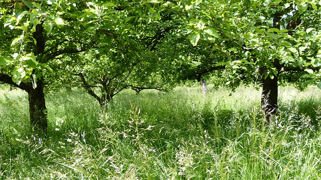 Free landscape meadow trees spring green rest nature