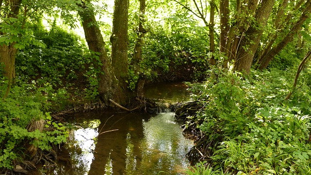 Free nature water bach landscape water running mood