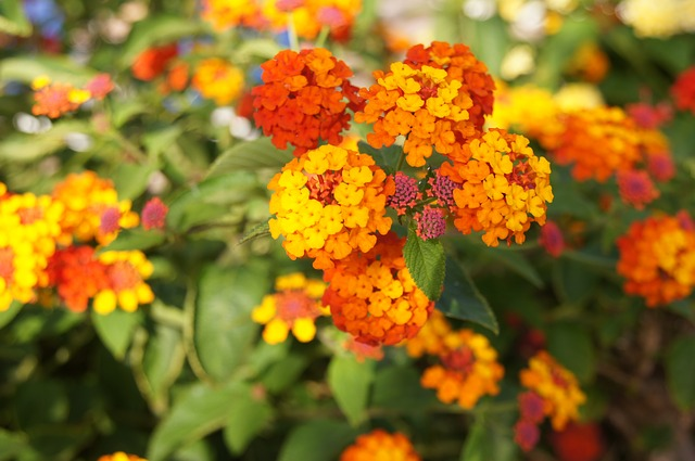 Free orange flowers orange flower plant flowers garden