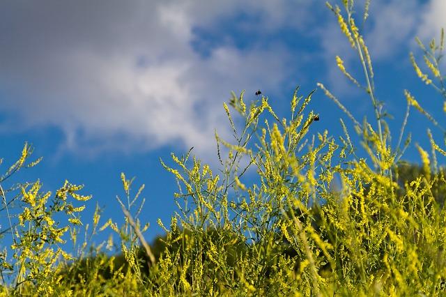 Free park grass greens sky blue sky yellow flowers