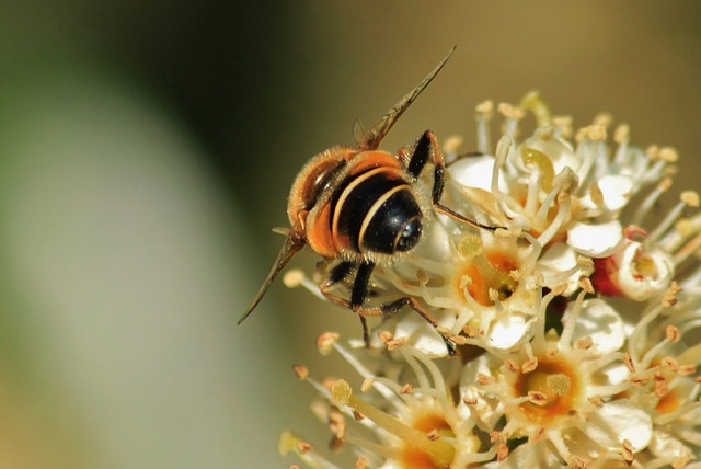 Free bee flower pollen macro insect pollination close