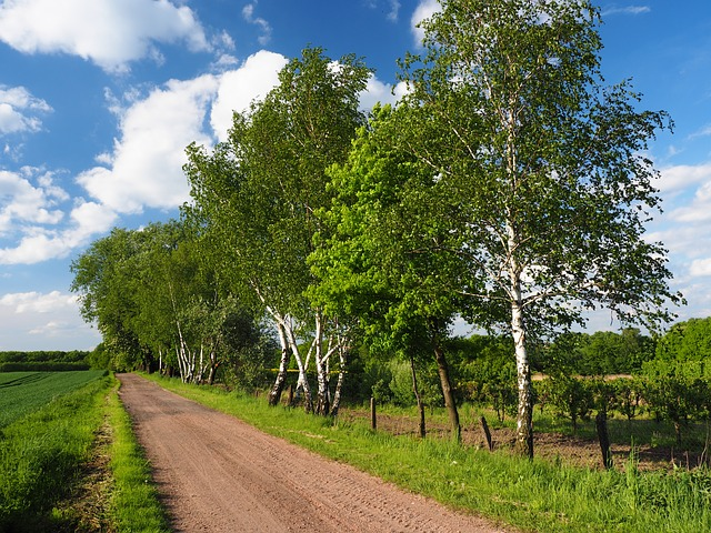 Free way birch village landscape view tree