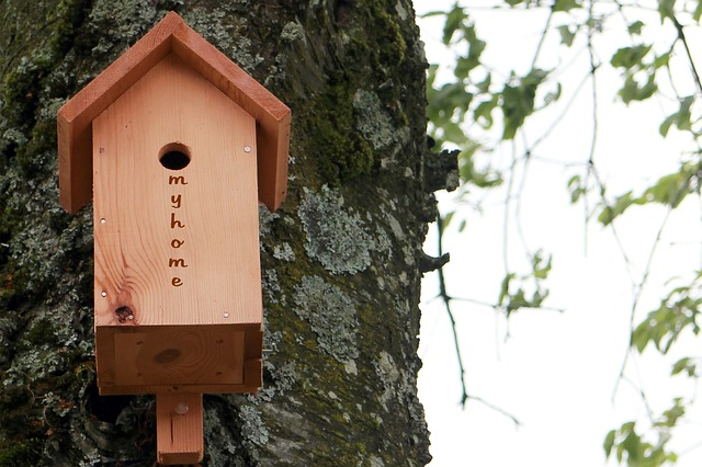 Free aviary bird feeder nesting box nesting help