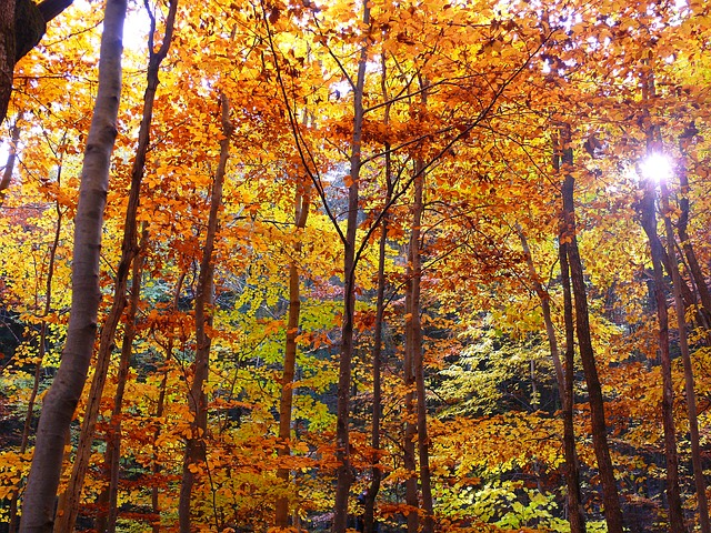 Free autumn forest autumn forest trees leaves sunbeam
