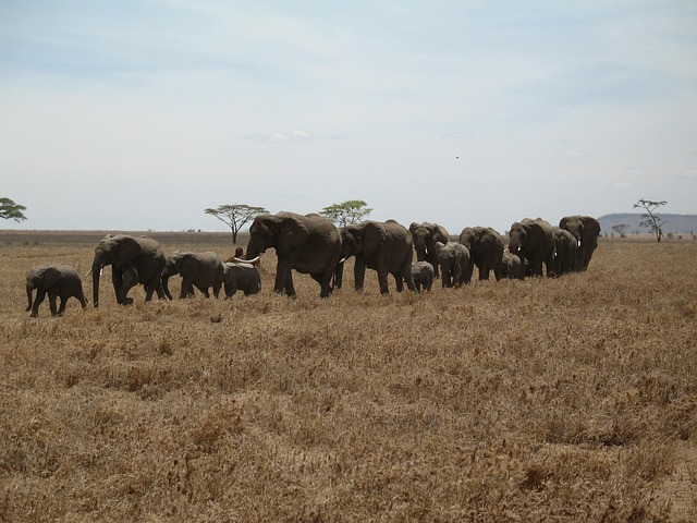 Free elephants tanzania line row large small