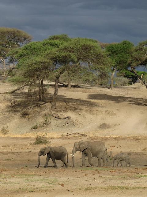 Free elephants tanzania nature dark air mama papa