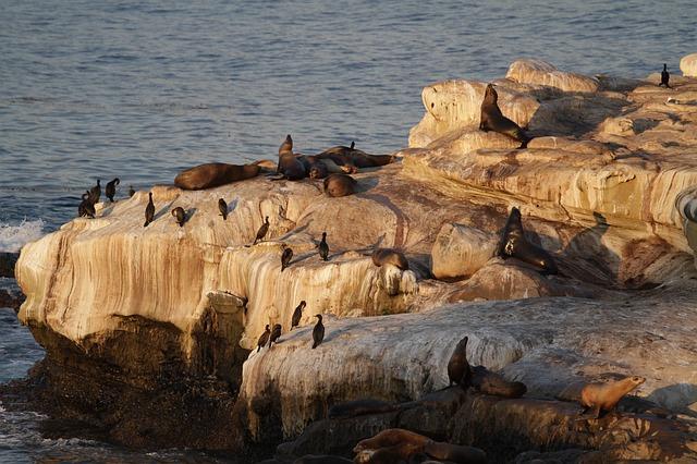 Free california sea lion seals seal sea lions harbor