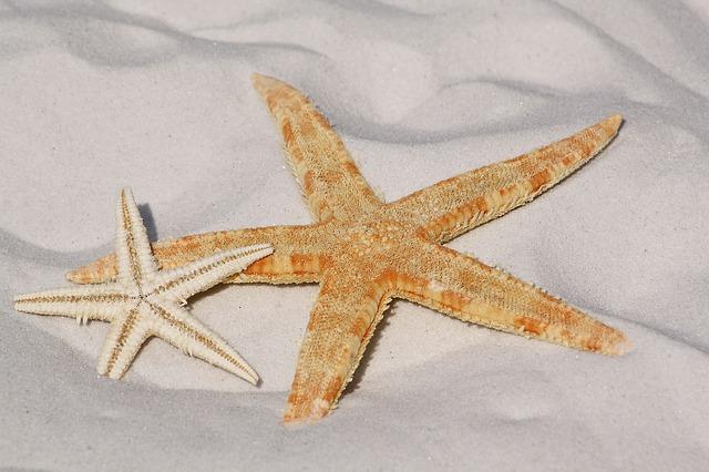 Free               starfish sand beach sea water sun see bodnar