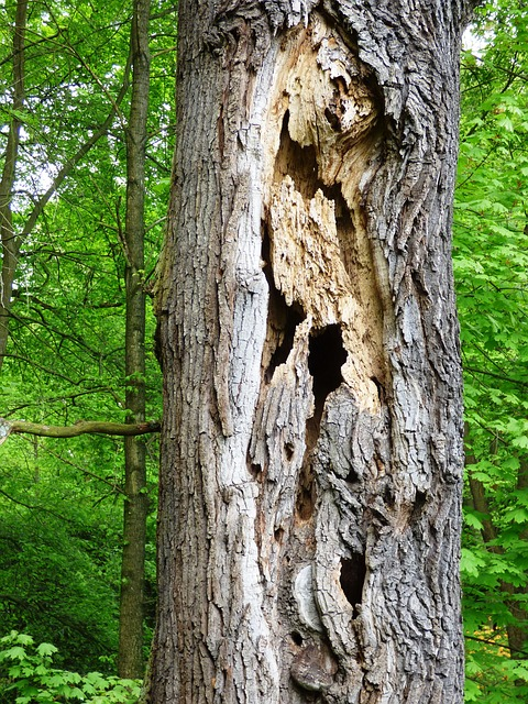 Free tree holes destroyed trunk the nature of the las