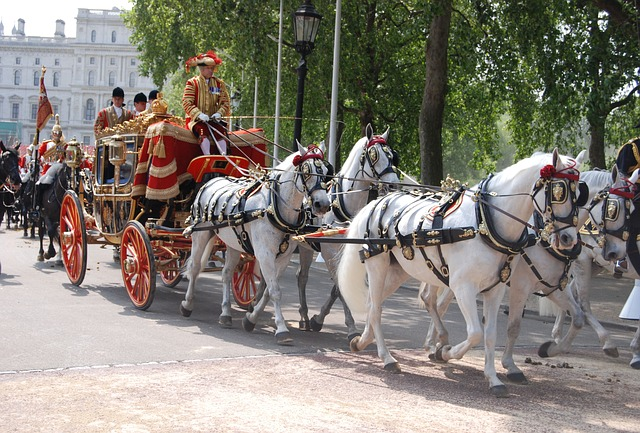 Free ceremonial coach tradition ceremony uniform horses