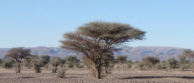 Free tree desert morocco