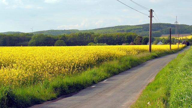 Free field oilseed rape away nature landscape yellow