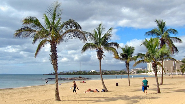 Free lanzarote beach sand palm trees sea recovery