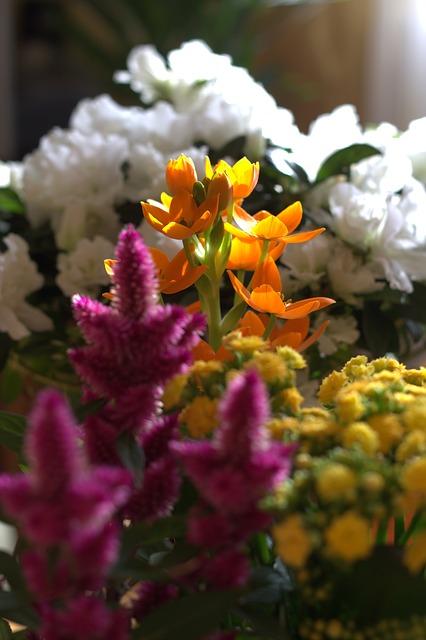 Free flower spring seedling fresh fragrant colors