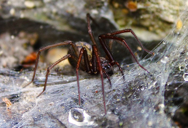 Free spider cobweb nature scary monster spiders