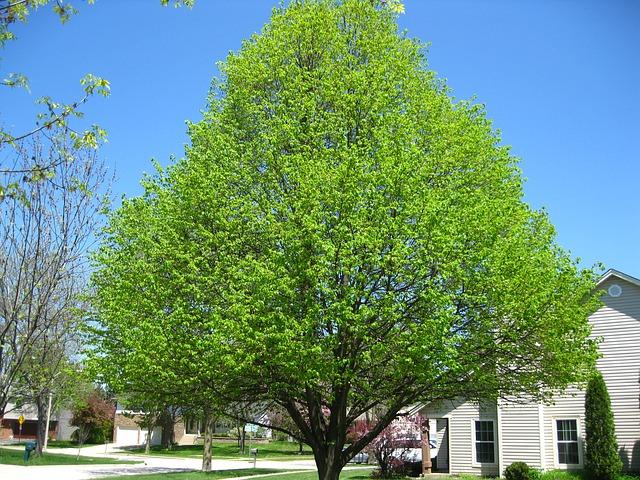 Free tree spring sunny nature