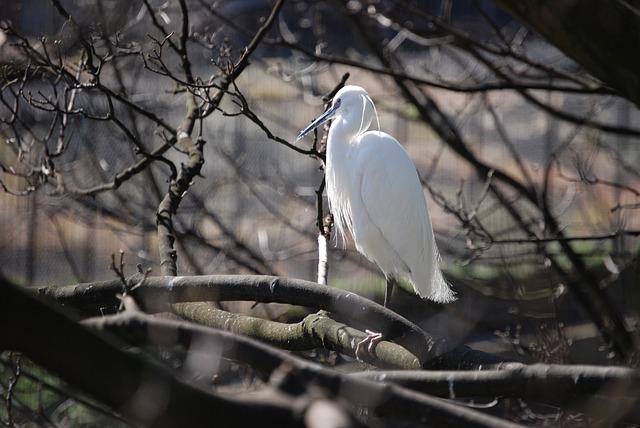 Free egret perch outside white