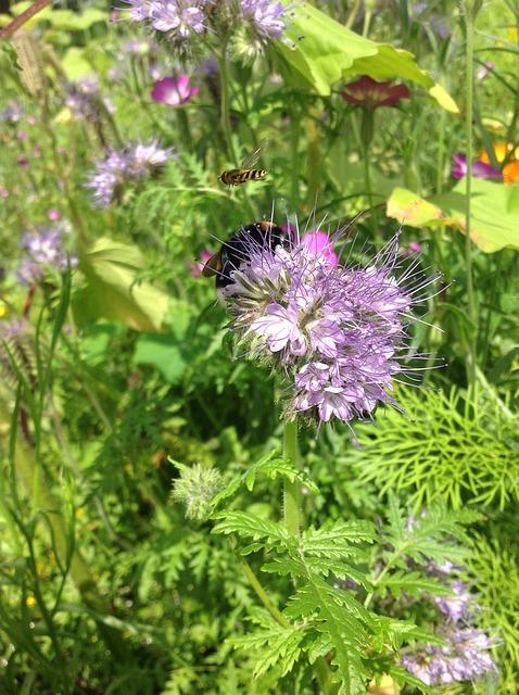 Free bumblebee garden bug flowers spring summer